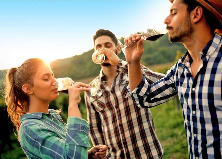 Tour entlang von Weinrebenstöcken im Spätsommer